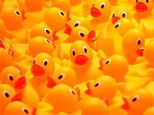 Rubber_duckies_So_many_ducks