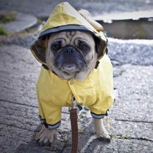 doggy-rain-coat